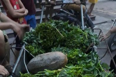 Vụ rau, củ, quả thối tại Vĩnh Phúc: Hiệu trưởng trường tiểu học lên tiếng xin lỗi
