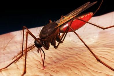 Khoa học 'đau đầu' vì chủng 'siêu sốt rét' không thể chữa trị và tiêu diệt