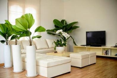 Theo phong thủy, người tuổi Mão nên trồng cây gì trong nhà để mang tài lộc?