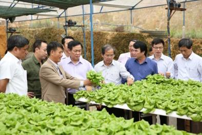Nâng cao chất lượng sản phẩm hàng hóa, đẩy mạnh triển khai nông nghiệp 4.0