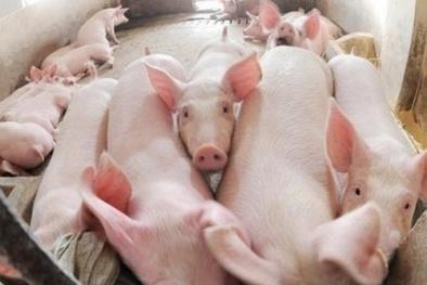 Giá cả thị trường ngày hôm nay (18/10): Giá lợn hơi tăng trở lại tại các tỉnh miền Bắc