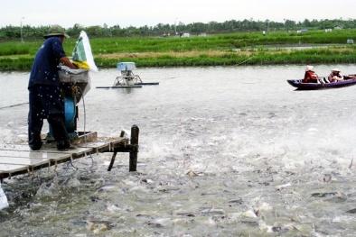 Cá chết hàng loạt với những bệnh thường gặp khi nuôi trong ao, hồ và cách điều trị