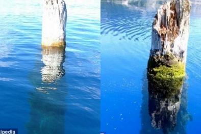 Bí ẩn thân cây dựng đứng hàng trăm năm giữa hồ sâu thứ 9 thế giới
