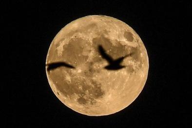 Siêu trăng duy nhất trong năm sẽ đạt 'cực đỉnh' vào tối nay (3/12)