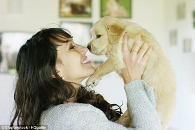 Cảnh báo: Nhiễm trùng khi ôm ấp, vuốt ve chó con