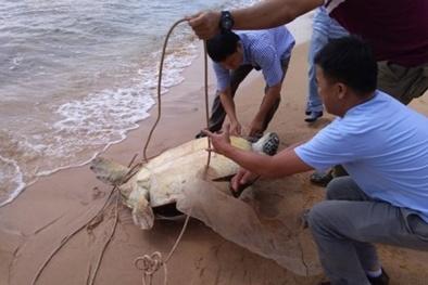 Chi hàng chục triệu đồng mua rùa biển 'khủng' để phóng sinh