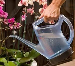 Kỹ thuật trồng hoa lan và tưới nước đúng cách cho hoa nở đẹp bền lâu chơi Tết