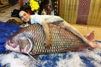 Đại gia Việt mạnh tay chi tiền săn cá hô 'khủng' làm tiệc đón Tết