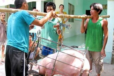 Giá cả thị trường ngày 12/1: Giá lợn hơi tại miền Bắc bất ngờ chững lại