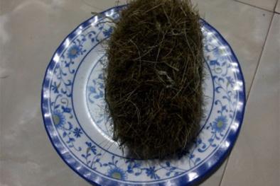 Quảng Ngãi: Phát hiện vật lạ nghi 'trư sa' tiền tỷ trong bụng heo nái