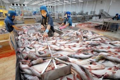 'Vua cá tra' Hùng Vương bị hạn chế về thời gian giao dịch cổ phiếu