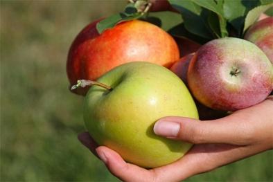 Mắc phải căn bệnh hiếm gặp vì ăn trái cây không rửa sạch