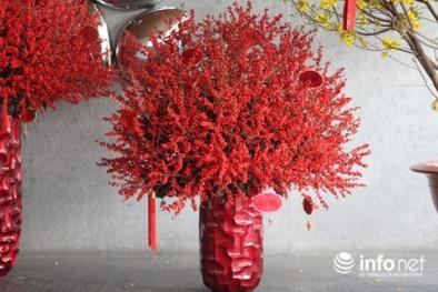 Bình hoa nhập từ Mỹ, Hà Lan đại gia Việt mua giá trăm triệu đẹp cỡ nào?