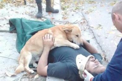 Rơi nước mắt với những mẩu chuyện về chú chó trung thành