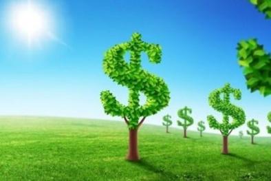 Kinh doanh xanh ngày càng rộng mở