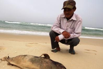 Quảng Bình: Phát hiện cá thiêng 'khủng' chết, dạt vào bãi biển