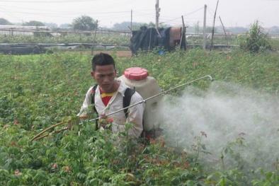 Tràn làn dùng thuốc diệt cỏ chứa chất cấm