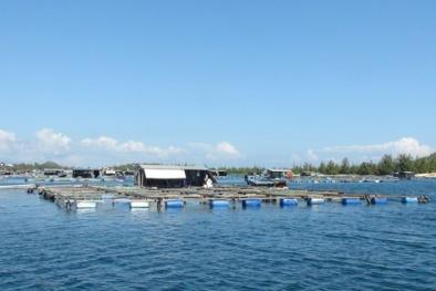 Gỡ vướng cho DN thủy sản khi thực hiện các 'chuẩn' về xử lý nước thải