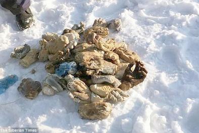 Đã tìm thấy nguyên nhân 54 bàn tay bị chặt rời gần sông băng