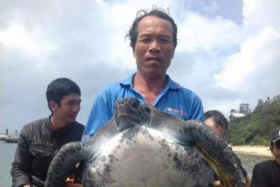 Quảng Nam: Rùa biển trong sách đỏ nặng 25 kg mắc lưới ngư dân