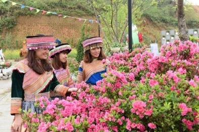 Hàng trăm loài hoa đỗ quyên cùng hội tụ tại Fansipan tháng 4 này