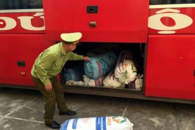 Quảng Ninh: Bắt giữ ô tô vận chuyển 150 nghìn con cá giống không rõ nguồn gốc