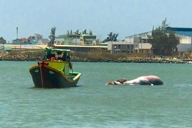 Bình Thuận: Ngư dân đưa cá Ông nặng 2 tấn vào đất liền mai táng