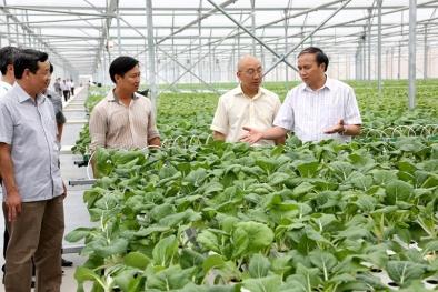 Sản xuất nông nghiệp hữu cơ - Vẫn còn đi qua 'khe cửa hẹp'