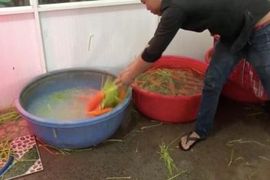 Kinh hoàng quy trình tẩy rửa củ cải, cà rốt bằng hóa chất