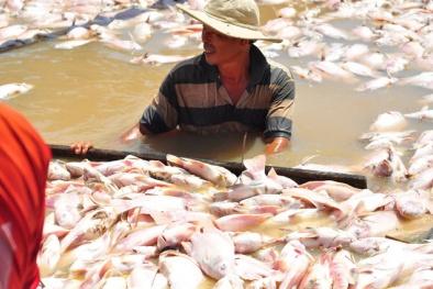 Cá chết trên sông La Ngà: 2 công ty trong diện tình nghi không có dấu hiệu xả thải