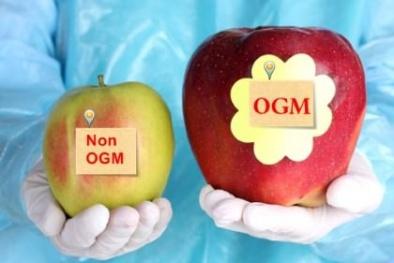 Thực phẩm biến đổi gen GMO - Hiểu thế nào cho đúng?