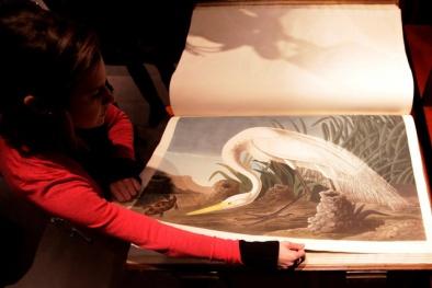 Quyển sách Các loài chim của Mỹ: Quyển sách đẹp nhất thế giới có giá đến 220 tỉ đồng