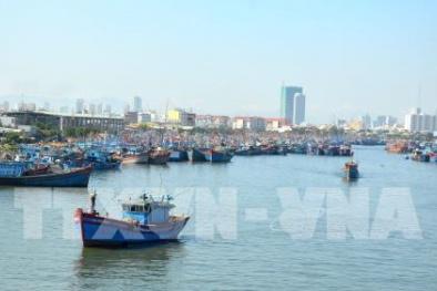 Nhiều chính sách hỗ trợ ngư dân đánh bắt hải sản ở vùng biển nước ngoài