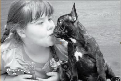 Cảnh giác với lây bệnh từ chó mèo