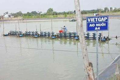 Chuyển đổi chứng nhận VietGAP sang ASC