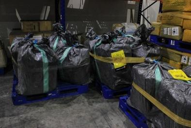 Thu giữ 24 kiện hàng ngà voi, sản phẩm ngà voi, vảy tê tê tại sân bay Nội Bài