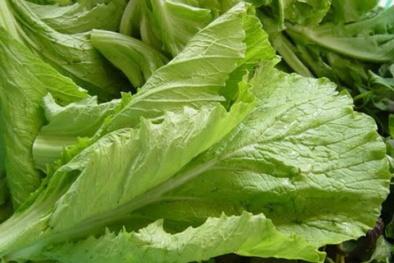 5 loại rau xanh nên ăn nhất trong mùa đông