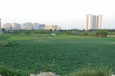 Dự án xây dựng bệnh viện gần 300 tỷ 'thống lĩnh đất vàng' chính thức bị thu hồi