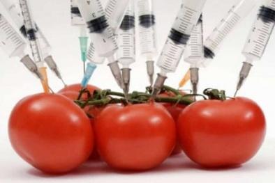 Uganda: Các chuyên gia cảnh báo về độ an toàn của thực phẩm biến đổi gen
