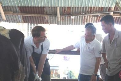 Nông dân Việt Nam, Hà Lan giao lưu tập huấn kỹ thuật chăn nuôi bò sữa