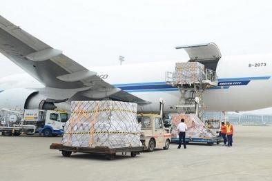 Năm 2018, gần 400 nghìn tấn hàng hóa được vận chuyển bằng đường hàng không