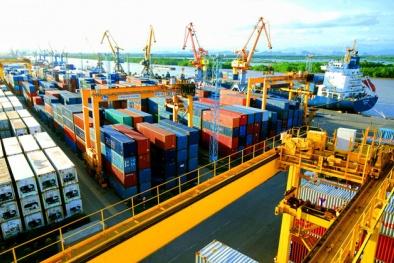 Hàng chục nghìn container phế liệu tồn đọng tại cảng biển: Các DN phản ánh rất nặng nề!