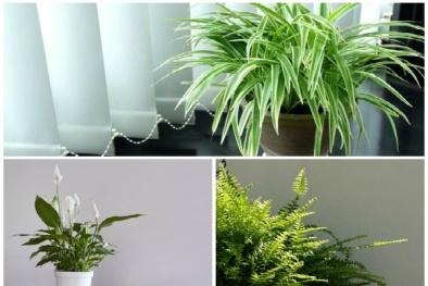 Trời nồm nên trồng những cây này trong nhà để hút ẩm, hiệu quả bất ngờ