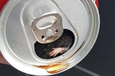 Uống gần hết lon Coca Cola, người đàn ông sợ hãi phát hiện chuột chết bên trong