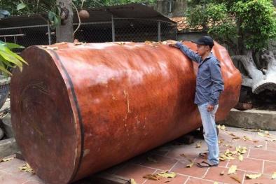 Kinh ngạc khúc gỗ nu Gõ đỏ siêu hiếm dài 3 mét, đại gia Hải Phòng trả giá gần 4 tỷ đồng