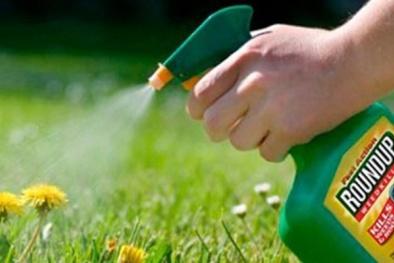 Nguy cơ gây ung thư, hoạt chất glyphosate được loại bỏ khỏi thuốc bảo vệ thực vật