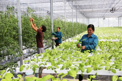 Nông nghiệp ứng dụng công nghệ cao: Chìa khóa giúp ĐBSH phát triển bền vững