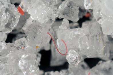 Cảnh báo nguy hiểm: Mỗi năm, con người có thể hấp thụ khoảng 50.000 hạt vi nhựa