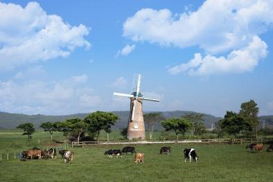 Vinamilk và những bước đi chiến lược trong 30 năm phát triển ngành chăn nuôi bò sữa