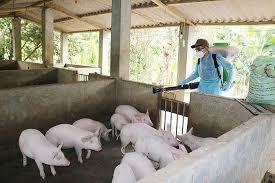 Thủ tướng ban hành Quyết định về hỗ trợ kinh phí phòng chống dịch tả lợn Châu Phi